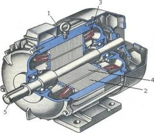 Вид асинхронной машины с короткозамкнутым ротором в разрезе