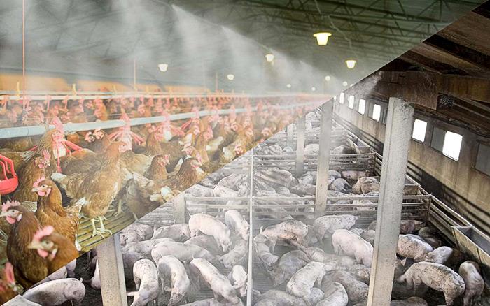 Охлаждение туманом на птицефабрике и свиноферме